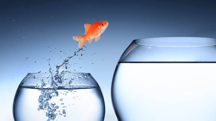 Goldfish jumping from one bowl to bigger bowl